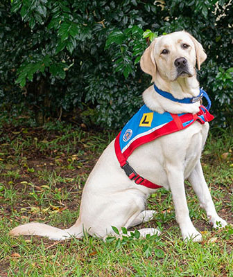 Blue Badge Insurance Assistance Dogs