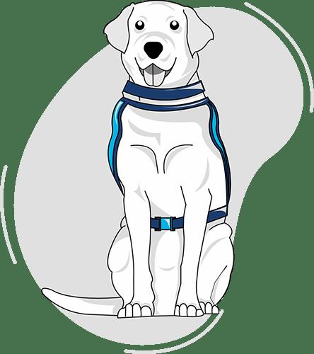 Blue Badge Insurance Assistance Dog