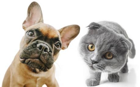 Pet Insurance - Cat & Dog